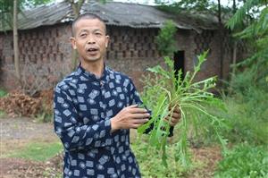 """厉害了!南溪大观镇一位48岁农民,野草卖出""""百万""""神话!"""