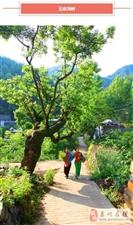 栾川这4个村,要火!已被省旅游局认定为首批乡村旅游特色村!