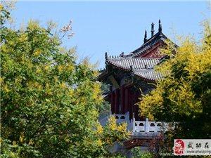 【武功古城】  书院秋香――党小成