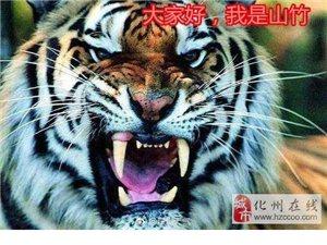 """18级暴力台风""""山竹""""即将登陆!化州天气晴热先来,暴雨随后..."""