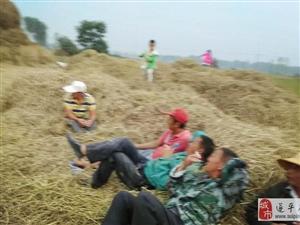 第一个农民节,农民丰收忙!