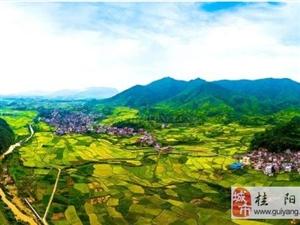 澳门网上投注游戏12万亩中稻迎来丰收