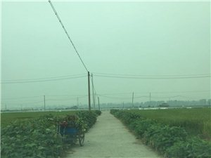 来说说洪蓝镇蒲塘村路家村进村的第二条马路旁边的农植物