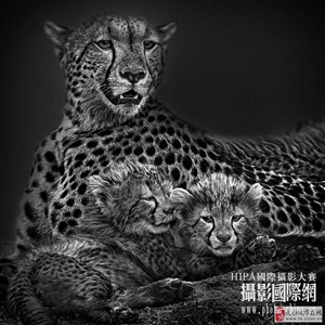 张晓萌HIPA国际摄影大赛参赛作品-国际联盟摄影家协会