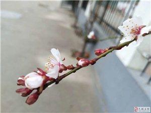 八月桃花盛开,幸福自来......