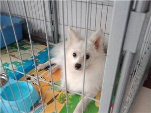 急!酬金2000元寻狗启示!找到立即转账!