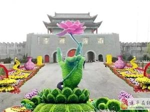 驻马店南海禅寺景区将举行首届菊展
