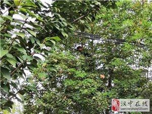 澳门美高梅国际娱乐场一公园,有蛇出没!