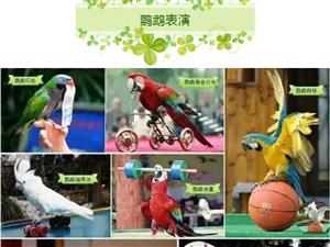 重大好消息//9月28日大型萌宠动物巡回展空降水韵天街!