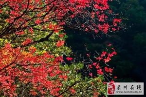 赏天河红叶品美味螃蟹,天河螃蟹节10月1日开幕,吹响吃货集结号~