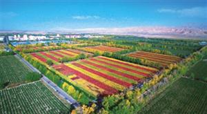 2018首届中国・柴达木藜麦节在乌兰都兰两县举行
