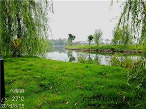"""广汉市兴隆镇:""""十里白鱼""""换新颜,生态改善惠民生(图片)"""