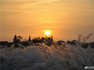 汉中天汉湿地公园芦苇与夕阳