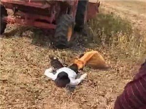 漯河一位老人捡豆子时,被收割机撞伤身亡...