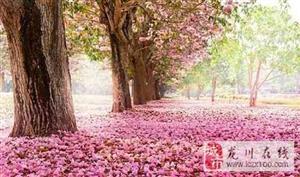 风过,花开是美,花落亦醉