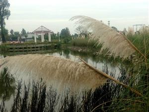【原创诗歌】时光和花园~~~坐在阳光明媚的湖畔/忘却时光何物