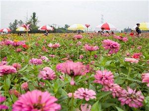 【大家之言】广汉撤市设区,将为向阳改革再出发提供强大动力(图片)