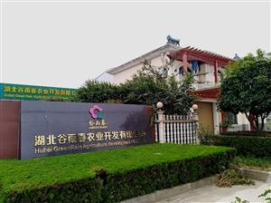 招聘新闻:湖北谷雨春农业征战有限公司招聘文员、装卸工、收集卖出