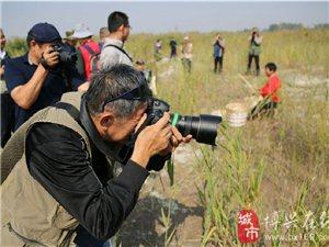 博兴县举办麻大湖国家湿地公园摄影大赛