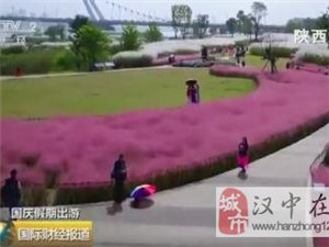 """央视报道!威尼斯人网上娱乐平台汉江湿地公园""""网红""""芦苇美如画"""