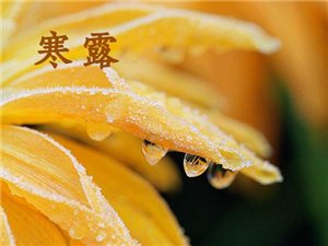 今日寒露:秋色苍茫离人在远方