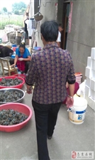 固城湖螃蟹 自产自销 蟹塘边吃螃蟹