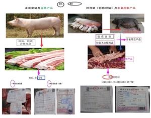 警惕!!种母猪肉越位肉类底线失守,一图普法