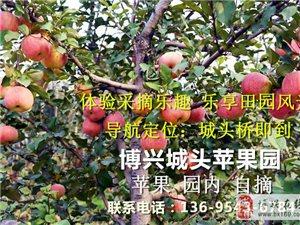 苹果采摘开始了 有想去的么 报明组团