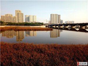 凌河红草滩