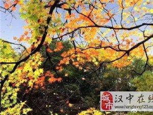 每年的金秋10月,汉中黎坪景区美爆了