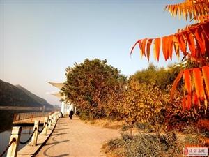 野鸭游戏红草滩