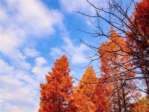 在红石梁,邂逅镇巴最美的秋天!