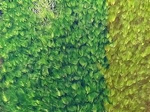 枫红水草绿