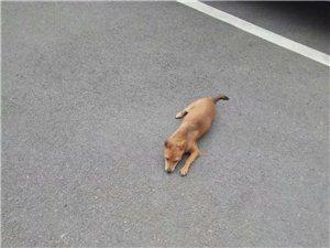 寻狗启示,五柳公园附近走丢,谁看到了请联系15872625257