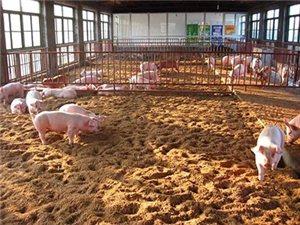 儋州预投1.36亿元处理畜禽粪污预计可达11万吨