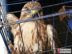 蓬溪一农户家中发现国家二级重点保护动物!