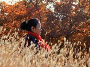 塔山《枫叶》红