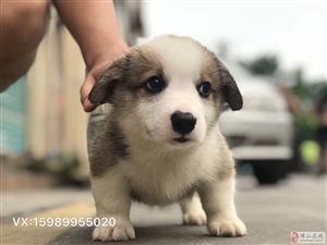 快d黎岌岌了喂~~极品可爱狗狗一堆