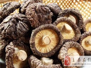 """香菇号称""""百菇之王"""",可你知道干香菇和鲜香菇,谁更有营养吗?"""