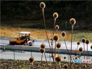 """四川将新增一条""""云端高速"""":汶马高速马尔康段预计今年底通车"""