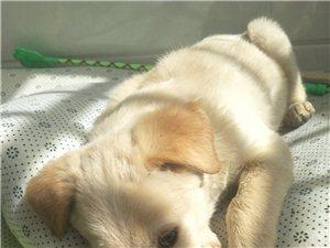 如果你在桃园浴池附近看到这只小狗,请善待他或者告知一下