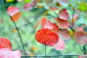 10月20日神沟赏红叶平安归来