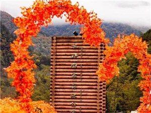 秋天赏红叶,来汉中这里聆听秋天的童话