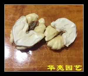 关于核桃林,关于广汉华亮园艺种植场,还有一个故事讲给您听~