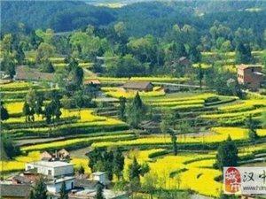 好期待 明年汉中油菜花节要举办这些活动