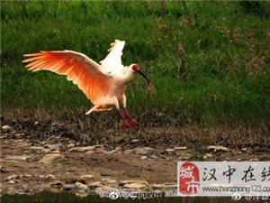 """人民日报:""""非常感谢中国再次赠送给我们朱�q"""""""