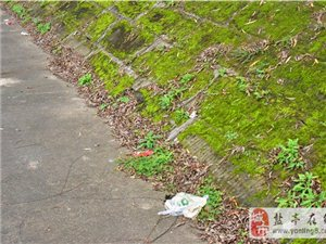 网友爆料:白色垃圾和污水已成河边一道靓丽的风景线.........