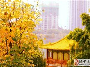 威尼斯人网上娱乐平台江边的银杏树叶子,美哉