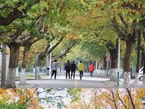 醉美深秋,走进陕西理工大学遇见最美的风景