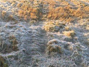 应该是今年的第一场霜